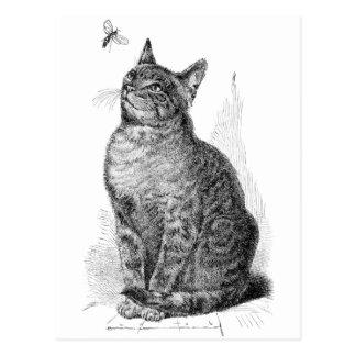 Ejemplo del vintage del gato que mira un insecto postal