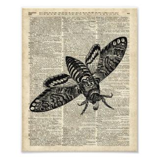 Ejemplo del vintage del insecto de la polilla en cojinete