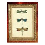 Ejemplo del vintage, tres libélulas tarjetas postales
