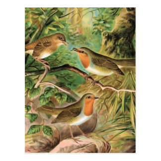 Ejemplo europeo del pájaro del vintage del postal