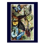 Ejemplo exótico antiguo de la mariposa de las mari postal