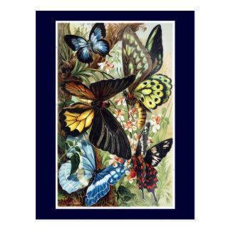 Ejemplo exótico antiguo de la mariposa de las postales