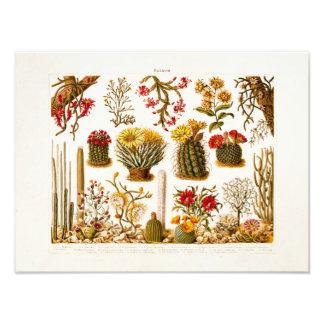 Ejemplo floral 1911 de la flor del cactus del fotografías