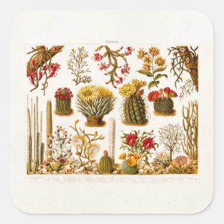 Ejemplo floral 1911 de la flor del cactus del pegatina cuadrada