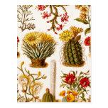 Ejemplo floral 1911 de la flor del cactus del vint postales