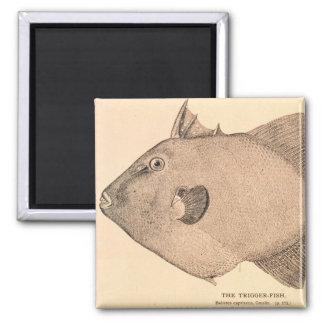 Ejemplo gris del Triggerfish Imán Cuadrado
