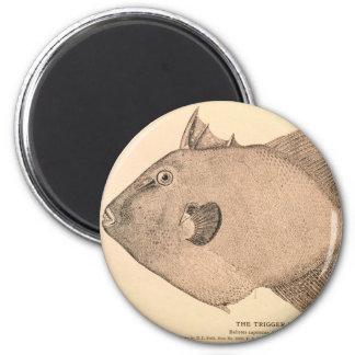 Ejemplo gris del Triggerfish Imán Redondo 5 Cm