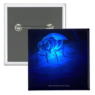 Ejemplo luminescente de una mosca de tsetse pin cuadrado