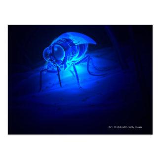 Ejemplo luminescente de una mosca de tsetse postal