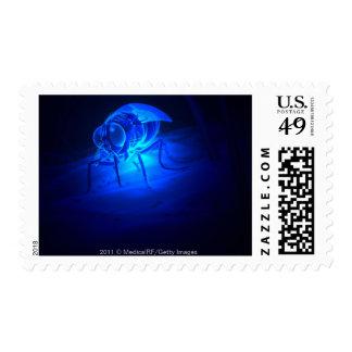 Ejemplo luminescente de una mosca de tsetse timbre postal