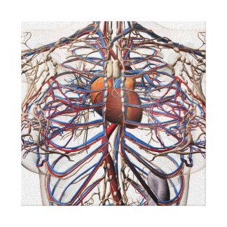 Ejemplo médico de las arterias femeninas del pecho impresión en lona