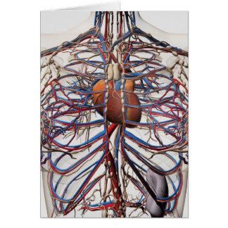 Ejemplo médico de las arterias femeninas del pecho tarjeta de felicitación