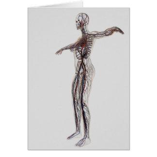 Ejemplo médico de las arterias femeninas, venas tarjeta de felicitación