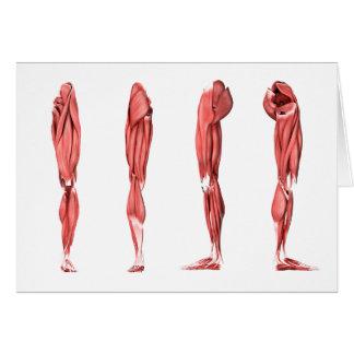 Ejemplo médico de los músculos humanos de la tarjeta