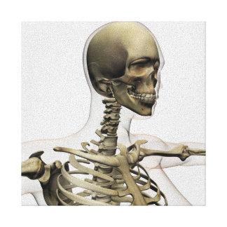 Ejemplo médico de un cráneo de las mujeres y impresion de lienzo