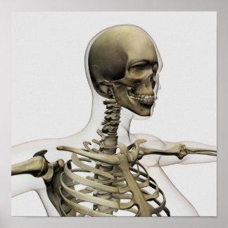 Ejemplo médico de un cráneo de las mujeres y póster