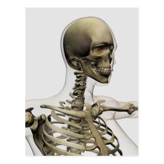 Ejemplo médico de un cráneo de las mujeres y postal