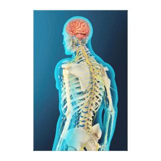 Ejemplo médico del cerebro humano y del tronco del impresiones en lona