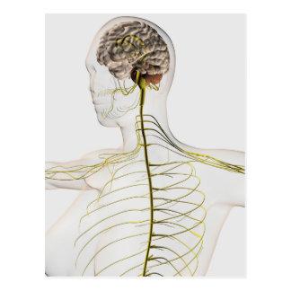 Ejemplo médico del sistema nervioso humano postal