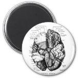 Ejemplo médico del vintage del kitsch su cerebro imán de frigorifico