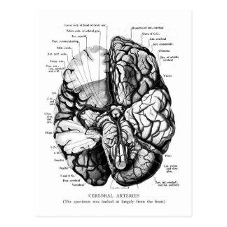 Ejemplo médico del vintage del kitsch su cerebro postal
