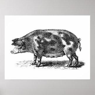 Ejemplo nacional del cerdo del vintage - cerdo 180 posters
