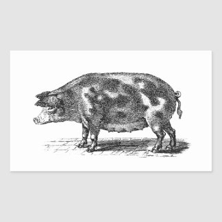 Ejemplo nacional del cerdo del vintage - cerdo rectangular pegatinas