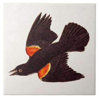 Ejemplo negro de alas rojas del pájaro de los 1800 azulejo cuadrado grande