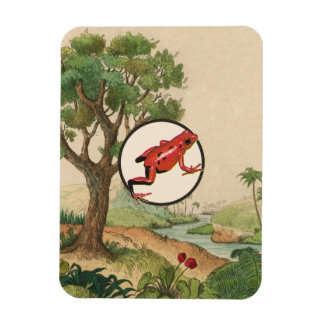 Ejemplo rojo del hábitat natural de la rana del iman flexible