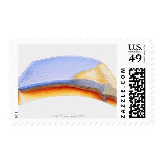 Ejemplo seccionado transversalmente de la sello