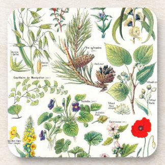 Ejemplos botánicos - plantas de Larousse Posavasos