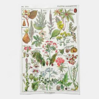 Ejemplos botánicos - plantas de Larousse Toallas De Mano