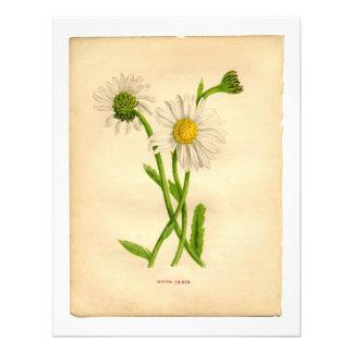 Ejemplos de Botanicals del vintage Comunicado Personalizado