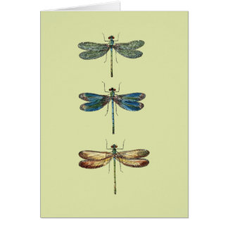 Ejemplos de la libélula tarjeta de felicitación