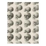 Ejemplos del cráneo del vintage postales