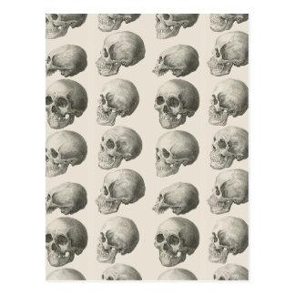 Ejemplos del cráneo del vintage tarjetas postales