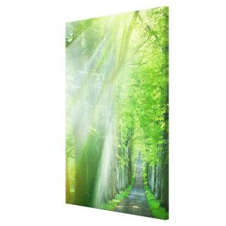 Ejes de la luz del sol impresión en lienzo