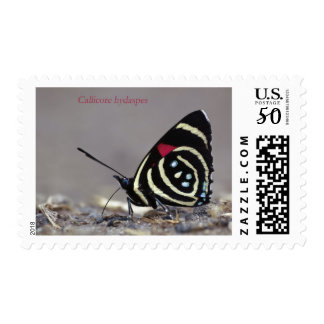 EkoArts Postage Stamps Butterfly Series