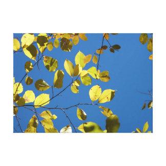 El abedul amarillo sale de la lona lienzo envuelto para galerías