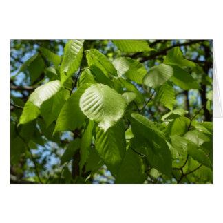 El abedul de la primavera sale del árbol verde tarjeta de felicitación