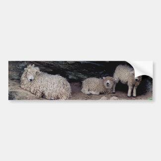 El abrigar largo de la familia de las ovejas de la pegatina para auto