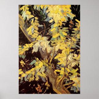 El acacia floreciente ramifica Vincent van Gogh. Póster