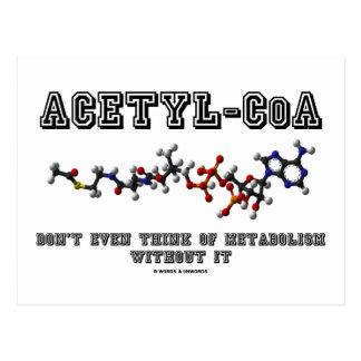 El Acetilo-CoA incluso no piensa en metabolismo Postal