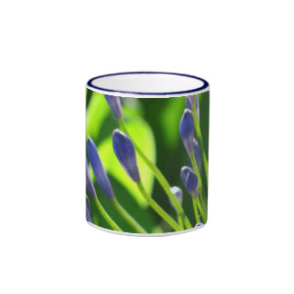 El Agapanthus azul florece la taza
