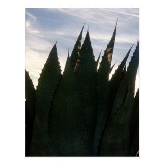 El agavo se eleva súbitamente postal