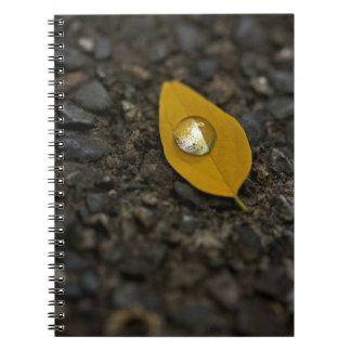 El agua da vuelta al cuaderno nacarado