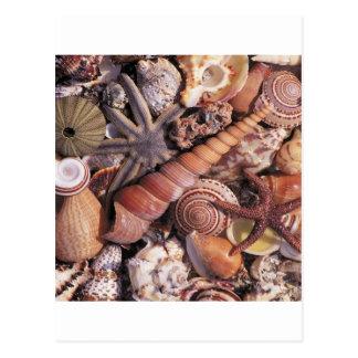 El agua de la naturaleza clasificada descasca la postal