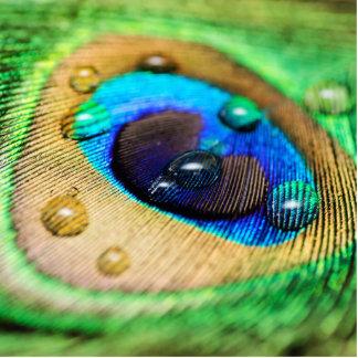 El agua de la pluma del pavo real cae la foto escultura fotográfica