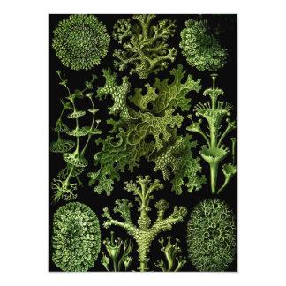 """El agua salada planta """" Dessins Marin sous Plante Invitación 5.5"""" X 7.5"""""""