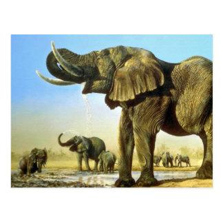 El agujero de agua, elefantes tarjeta postal